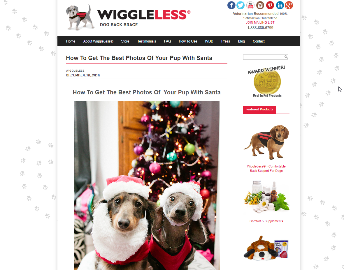 Kirsten Krupps | Guest Blog Post for Wiggleless Dog Back Brace